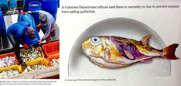 Activity Report | International Fugu Association